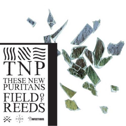 new-puritans-field-of-reeds-cover