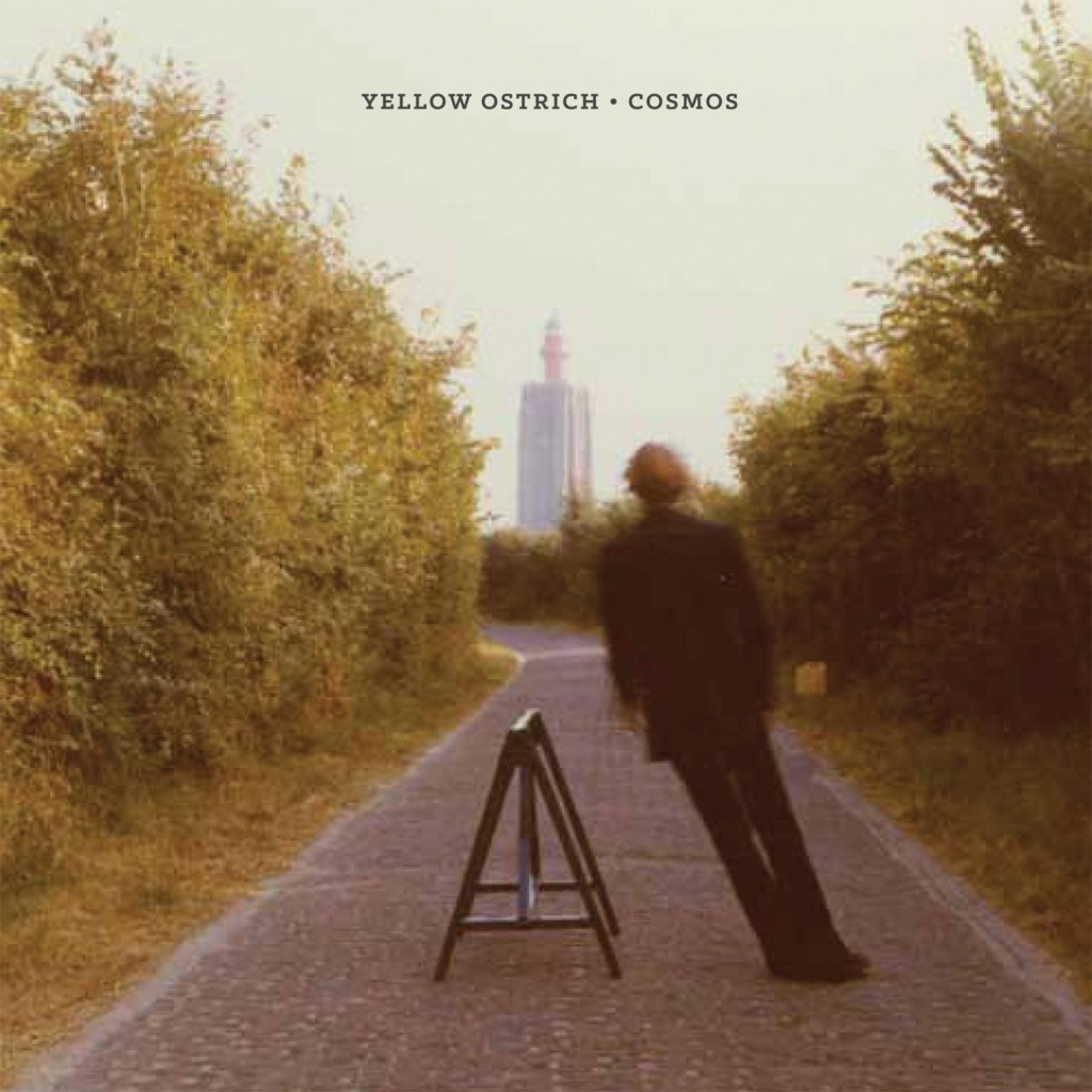 yellow-ostrich-cosmos