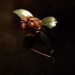 St. Paul & The Broken Bones: Young Sick Camellia [Album Review]