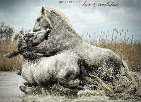 Over The Rhine: Love & Revelation [Album Review]